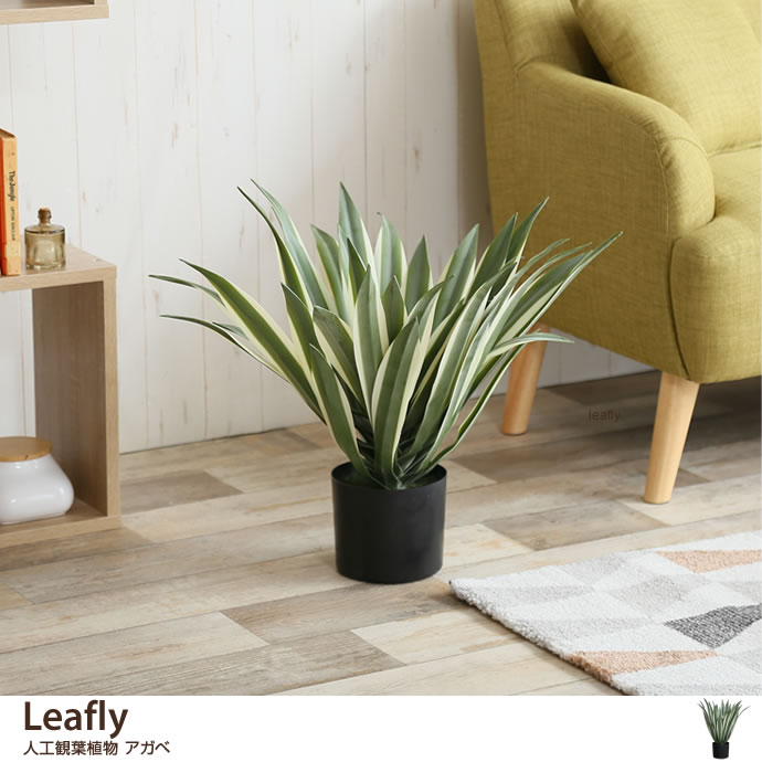 Leafly 人工植物 アガベ