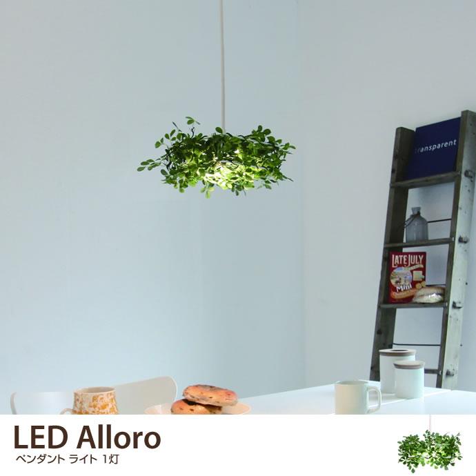 LED Alloro