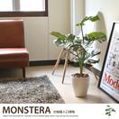 観葉植物モンステラ75