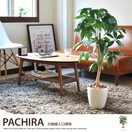 観葉植物パキラ90