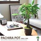 観葉植物パキラポットM