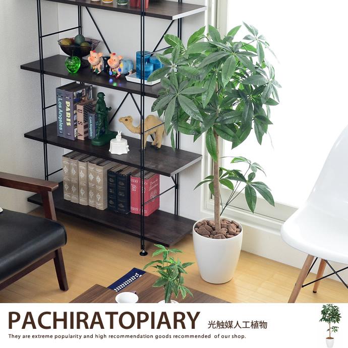 パキラトピアリー1.2