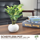 観葉植物シェフレラポット