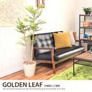観葉植物ゴールデンリーフ1.25