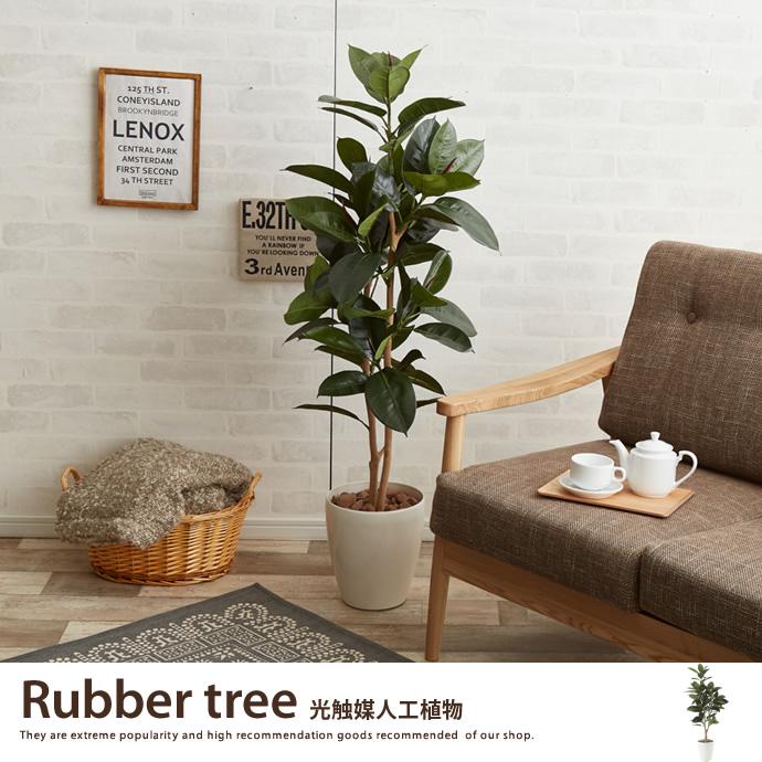 ゴムの木1.25
