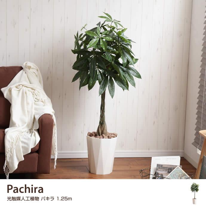 【高さ1.25m】Pachira 光触媒人工植物 パキラ