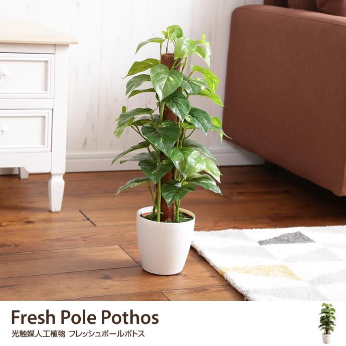 Fresh Pole Pothos 光触媒人工植物 フレッシュポールポトス
