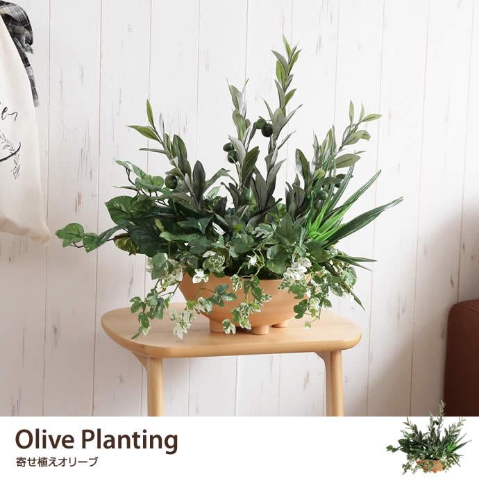 Olive Planting 光触媒人工植物 寄せ植えオリーブ