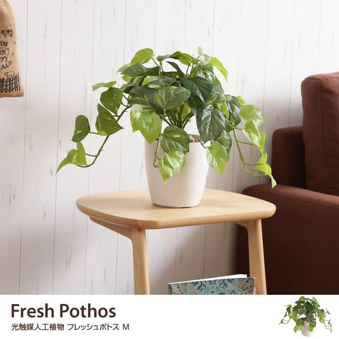 Fresh Pothos 光触媒人工植物 フレッシュポトス M