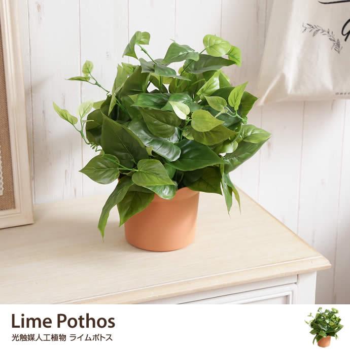 Lime Pothos 光触媒人工植物 ライムポトス