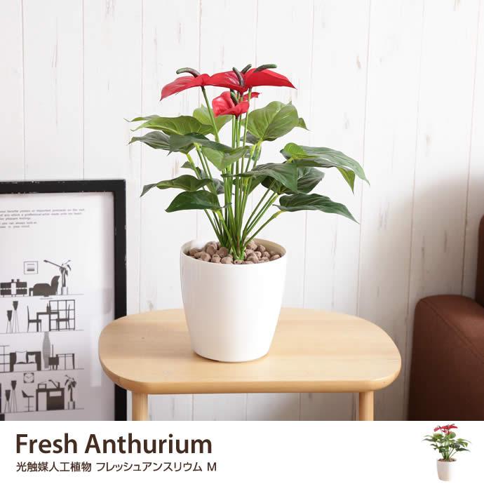 観葉植物Fresh Anthurium 光触媒人工植物 フレッシュアンスリウム M
