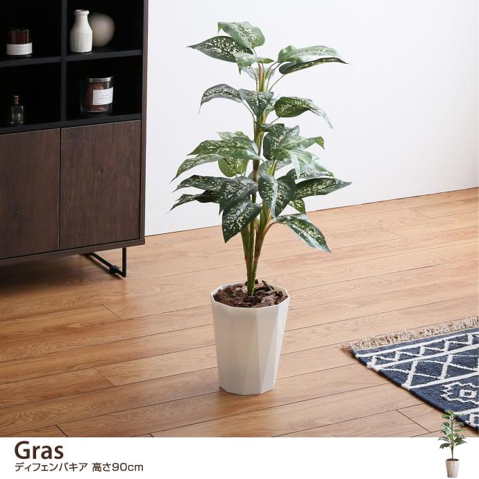 【高さ90cm】 Gras ディフェンバキア