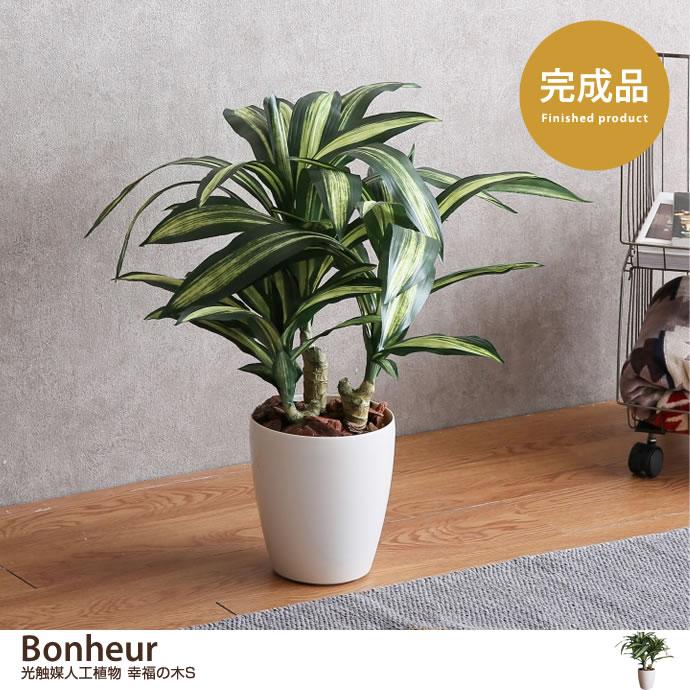 Bonheur 光触媒人工植物 幸福の木S