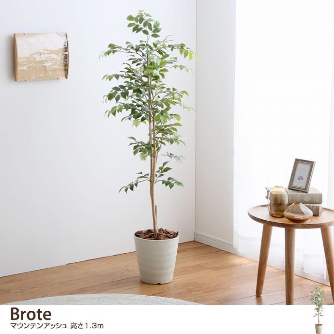 観葉植物【高さ1.3m】 Brote マウンテンアッシュ